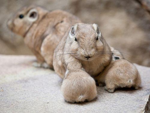 Gundi_Artis-Zoo