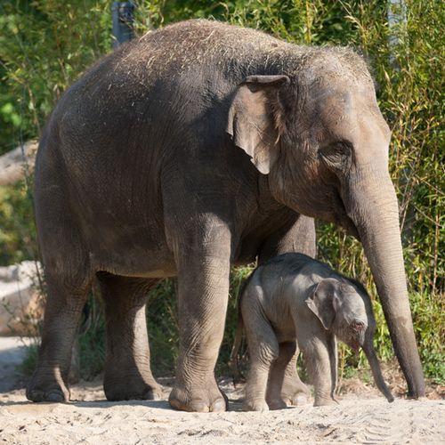 Elefant-Temi_Baby_TPH