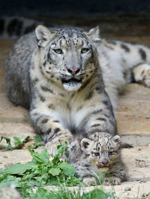Mother and Cub at Zoo Basel