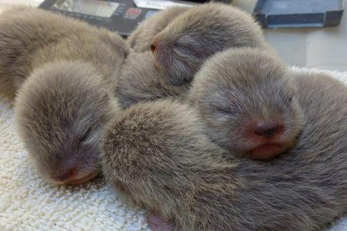 SB-Zoo-Otter-Pups-2011-credit-Sheri-Horiszny