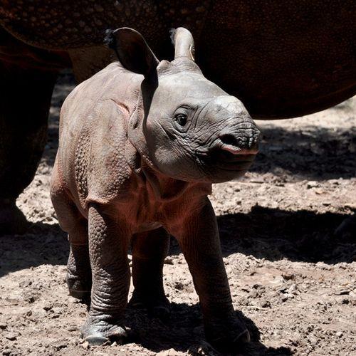 Rhino_Lowry_Park_Zoo_2