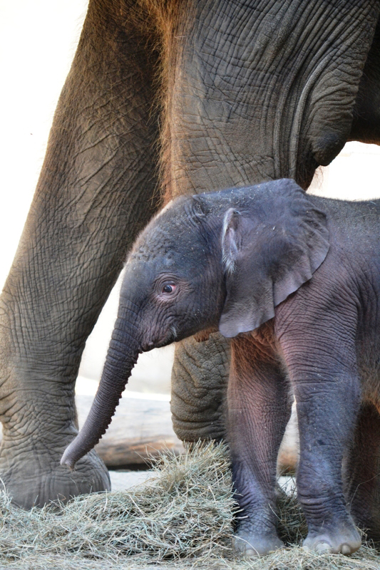 Elephant baby5-7-11-Gabi Moore-rev