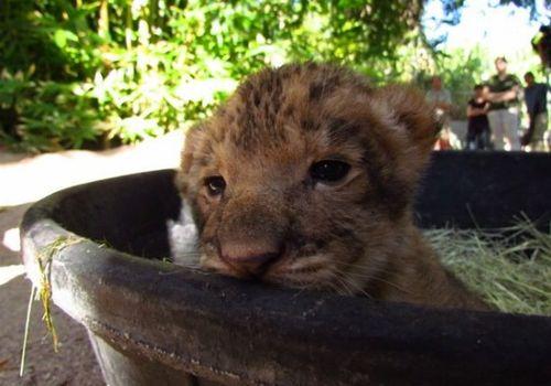 Cutie peeking from tub