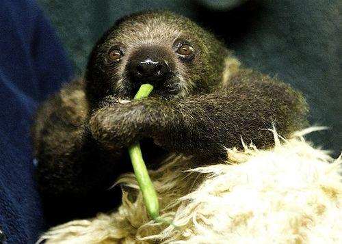 Sid Eatin' Greenbeans