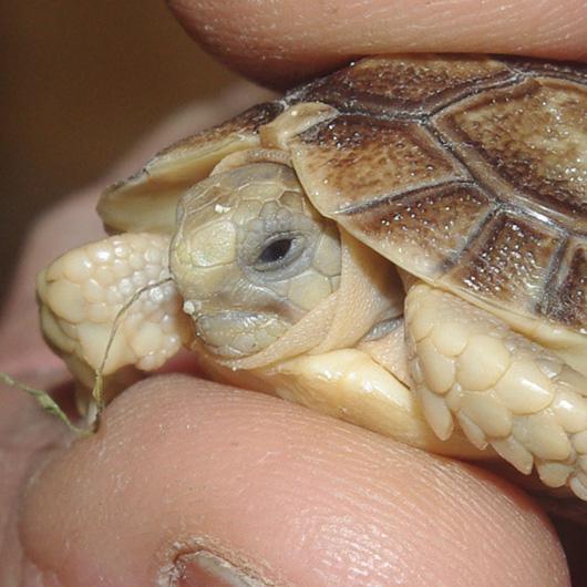 Tortoise_hand