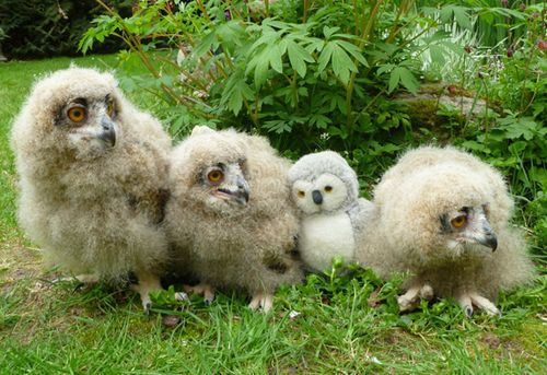 Turkmenian-Eagle-Owl-chicks-4-weeks-old