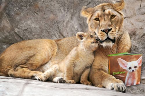 LionCubWithMother