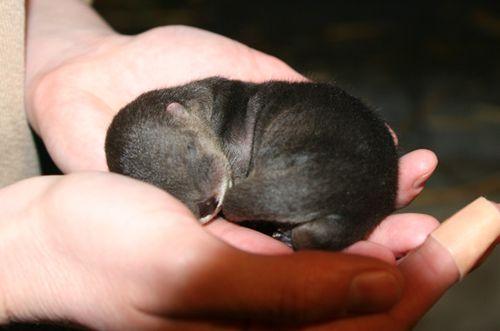 Oakland-Otter-Pups-3