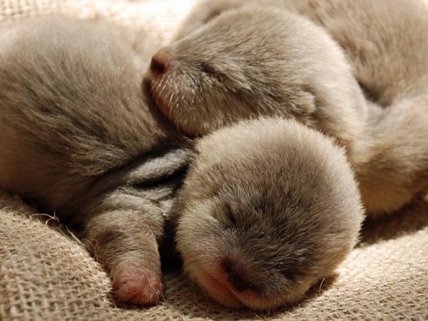 SB-Zoo-Otter-Pups