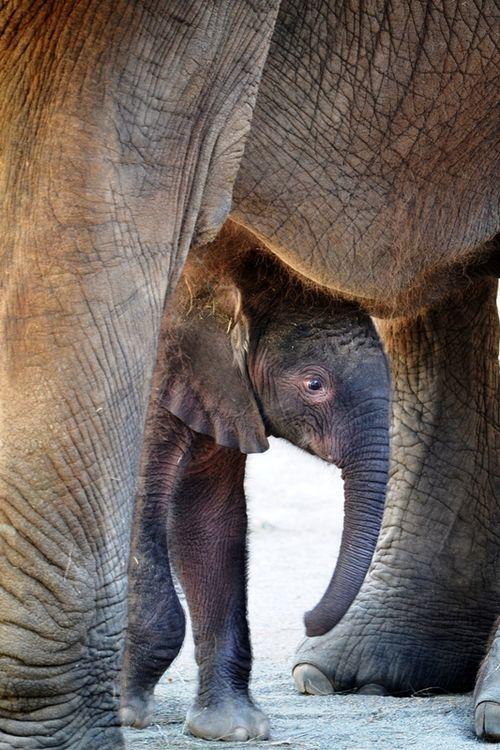 Elephant baby 7-11-Gabi Moore-rev