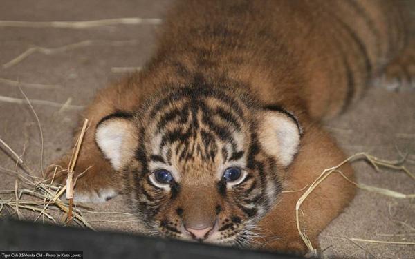 Cubs-3-weeks-2-lg