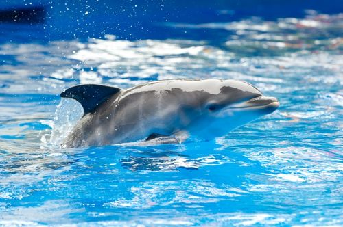 Dolphin Mom Arial and Calf - SeaWorld3