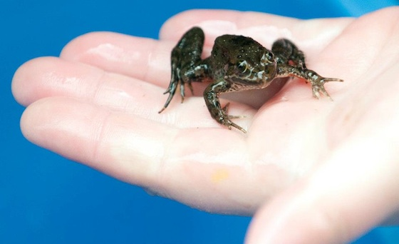 A frog in hand...