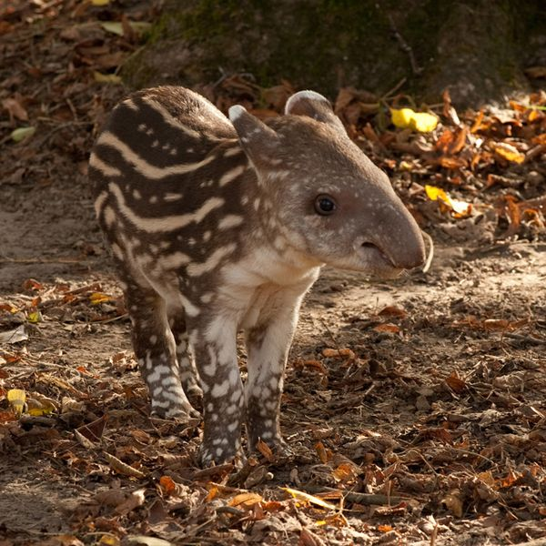 Spots and Stripes at Howlett's Animal Park - ZooBorns