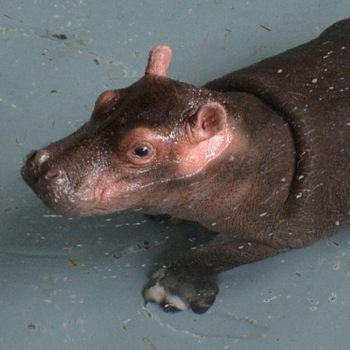Baby-Hula---Pool