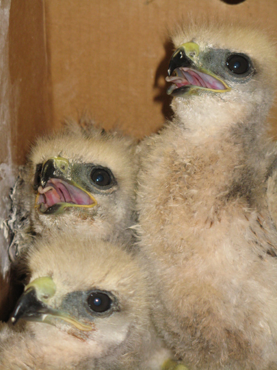 RTH_LOOKING_FOR_FOOD_59093