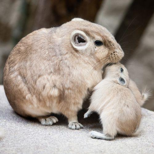 Gundi_Artis-Zoo-4