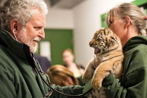 Tigers_3615 vet
