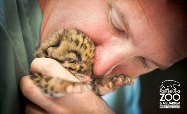 PDZA_clouded-leopards-Day-9_2