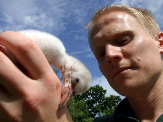 Chick 7