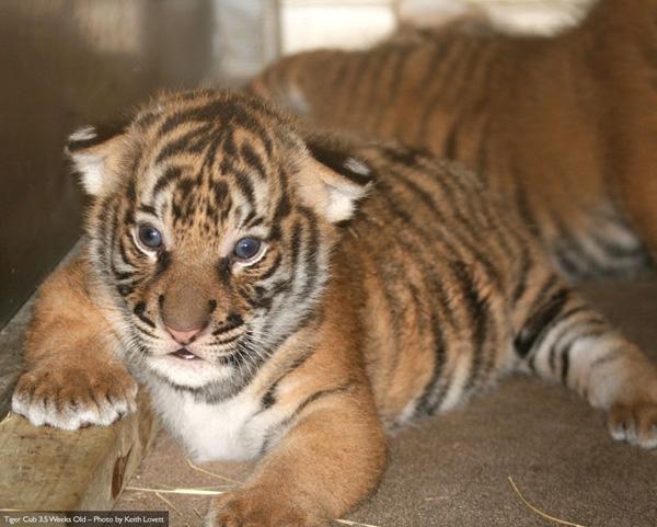 Cubs-3-weeks-4-lg