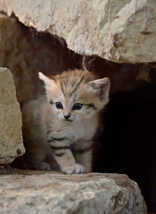 Sand-Cats-Tel-Aviv-Ramat-Gan-4