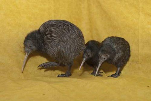 Yello Kiwi 71- G. Jones, Columbus Zoo and Aquarium