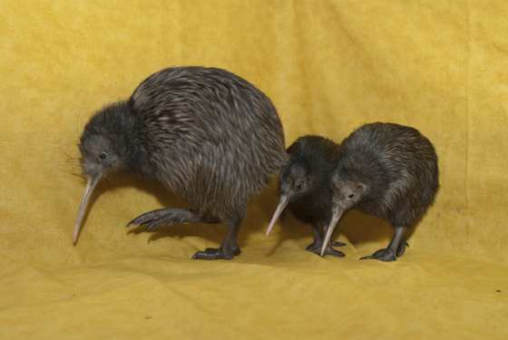 Yello Kiwi 71- G. Jones, Columbus Zoo and Aquarium