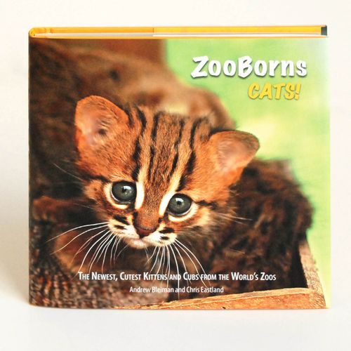 ZooCats!v4