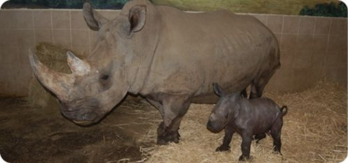 Rhino and mon