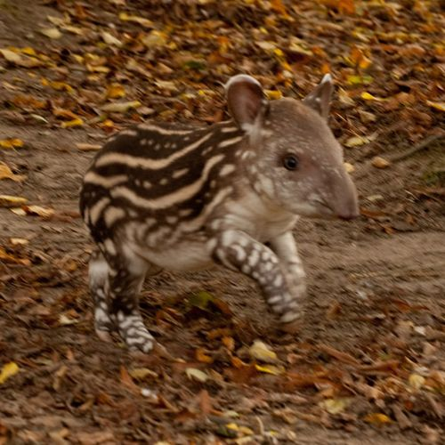 Spots and Stripes at Howlett's Animal Park - ZooBorns