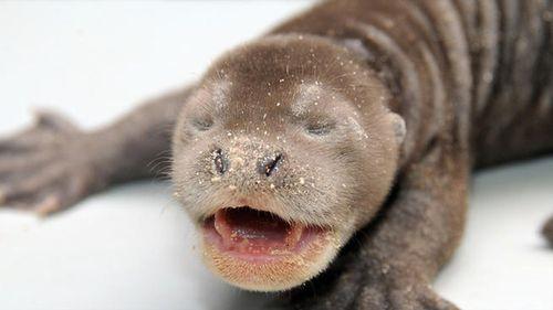 Otter+pups+copy