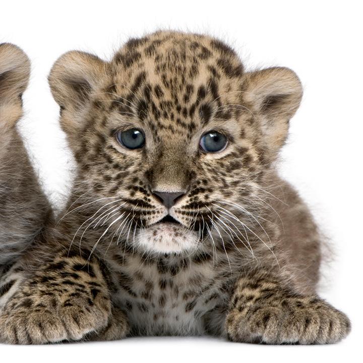 ZooBorns_CATS!_6