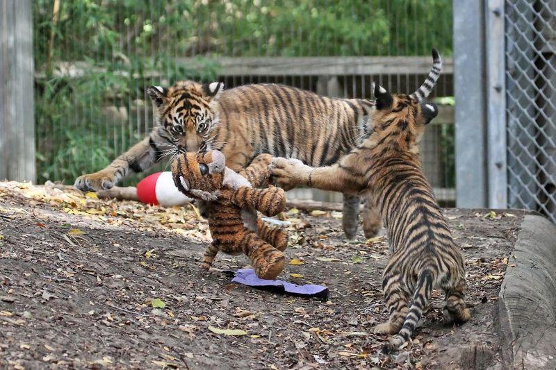 Cameron Park Zoo 5
