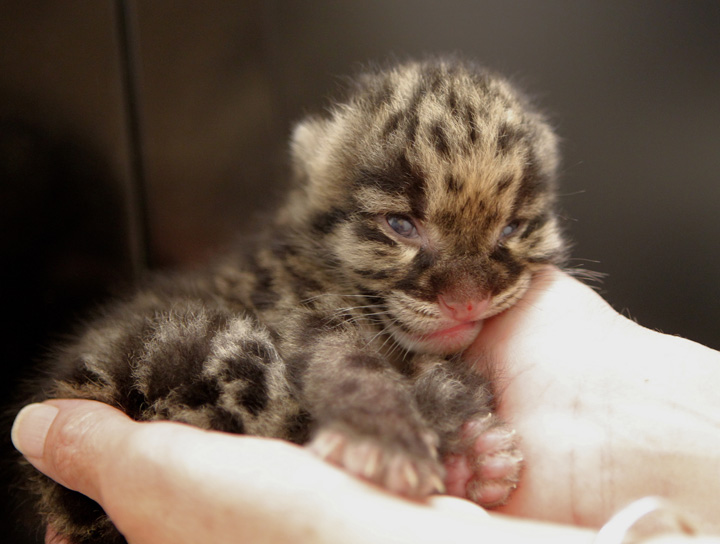 ZooBorns_CATS!_4