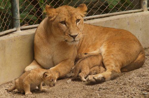 Mom + cubs