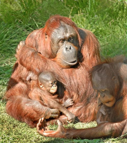 Baby-Kalim & Berani 11-7-11_Tad Motoyama 9133