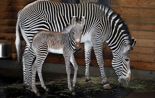 Mom_foal