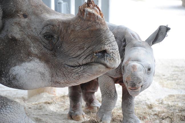 Rhino-13
