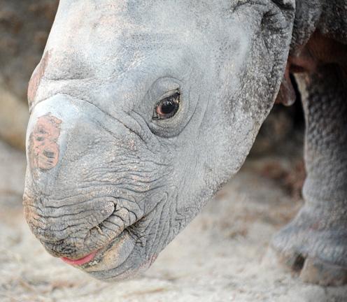 Rhino-12