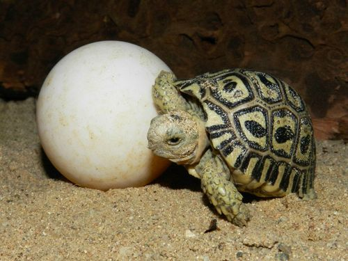 Turtle - Prague Zoo