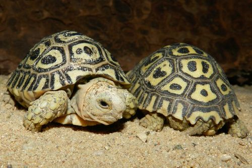 Turtle - Prague Zoo7