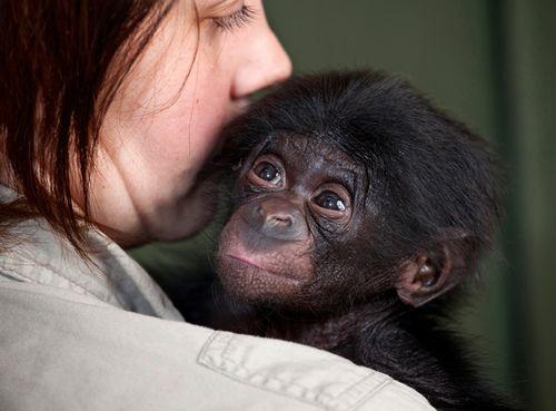 Bonobo_05