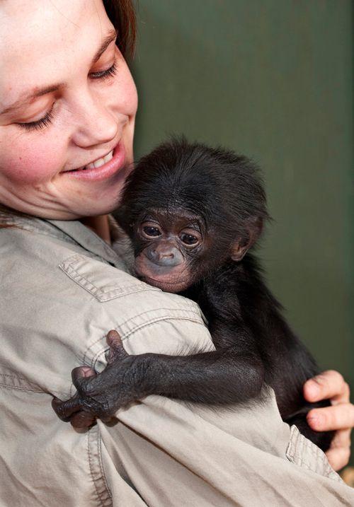 Bonobo_06