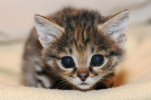 Cute Cat That Looks Like Toy