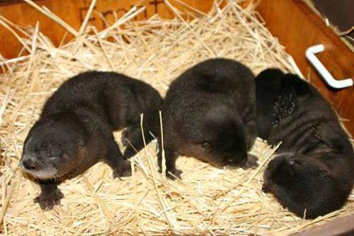 Pup trio