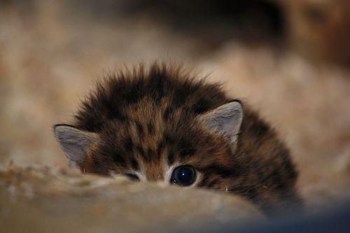 Peek a Kitten