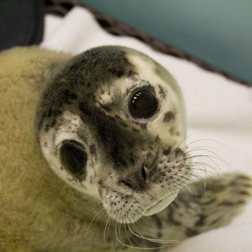 20120504_Seal-9962
