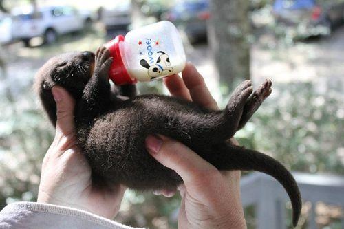 Otter-Pup-Virginia6