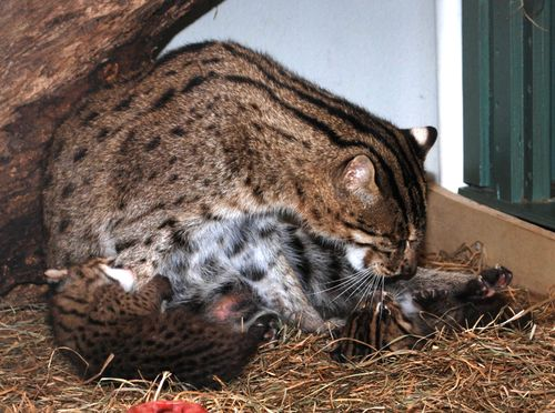 Fishing Cats Mehgan Murphy 4